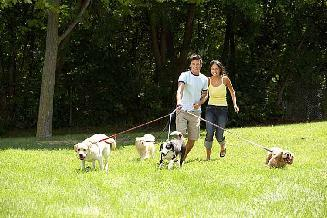 Couple walking dogs for the exercise
